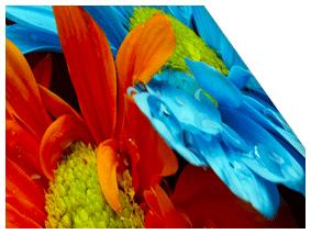 合成紙(のり付き)の表面画像